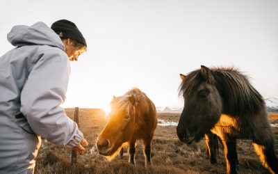 Research and evidence on the effectiveness of incorporating horses into learning and healing